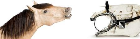 Horse Dental Equipment